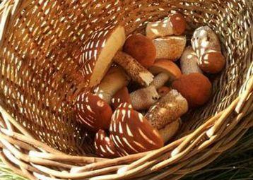 Mushrooms of Brač island