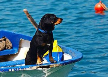Summer in Supetar with your pet